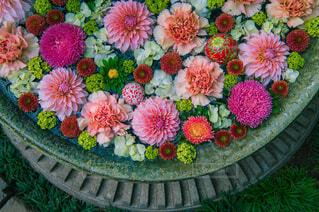 花,綺麗,草,草木,花手水