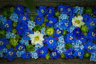 花,綺麗,青,草,カラー,草木,花手水