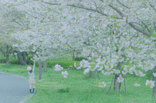 花,春,屋外,草,樹木,ブロッサム