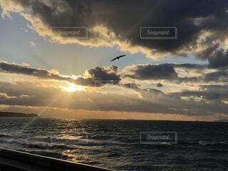自然,海,空,鳥,屋外,太陽,ビーチ,雲,夕暮れ,水面,海岸,日の出,くもり,日中