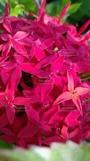 花,屋外,ピンク,赤,サボテン,草木,ブルーム,フローラ