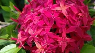 花,ピンク,赤,草木