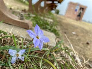 花,屋外,草,昆虫,蝶,草木