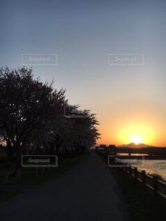 空,春,夕日,桜,屋外,雲,夕暮れ,水面,樹木,帰路