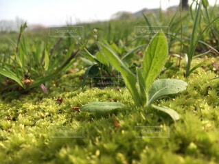屋外,緑,草,雑草,苔,新緑,朝,草木