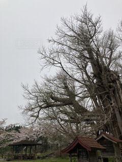 家の前の木の写真・画像素材[4373118]