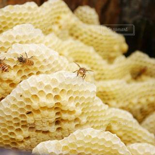 蜂,ミツバチ,はちみつ,養蜂,蜂の巣,日本蜜蜂,天然の蜂蜜