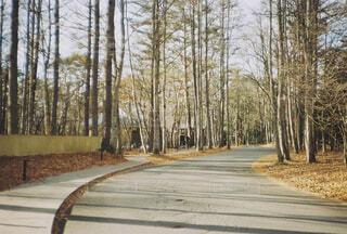 風景,空,屋外,樹木,軽井沢,屋外撮影