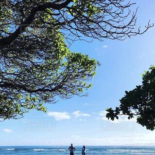 自然,風景,空,屋外,雲,青い空,水面,樹木