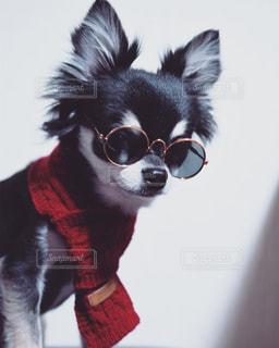赤白と黒犬の写真・画像素材[1201406]