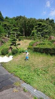 風景,夏,屋外,樹木,人物,虫取り,虫,少年,草木
