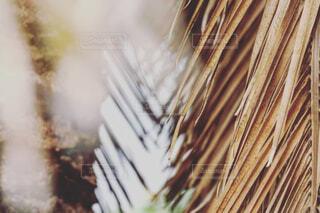リゾートな植物の写真・画像素材[4356572]