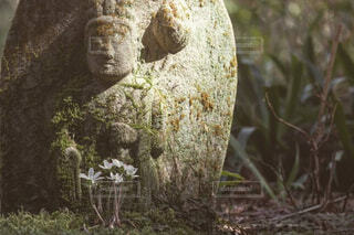 草の中に立っているクマの写真・画像素材[4419581]