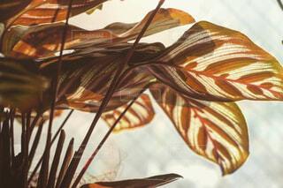 植物の写真・画像素材[4419583]