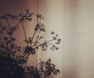 クリスマスツリーのある花瓶の写真・画像素材[4419585]