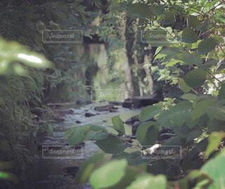 木のクローズアップの写真・画像素材[4419629]
