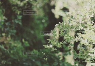 森の中の緑の植物の写真・画像素材[4419628]