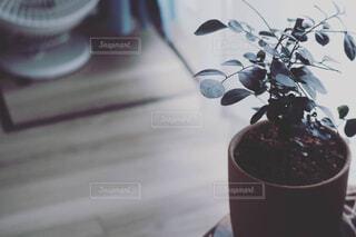 テーブルの上にコーヒーと花瓶を置いたの写真・画像素材[4469669]