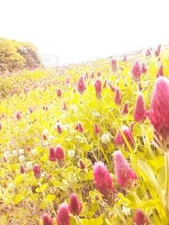 風景,花,カラー,草木