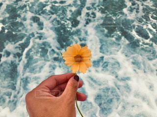 一輪の花 海での写真・画像素材[4354861]