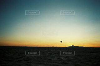 夕暮れの富士山とカモメの写真・画像素材[4354769]