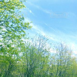 木のクローズアップの写真・画像素材[4360486]
