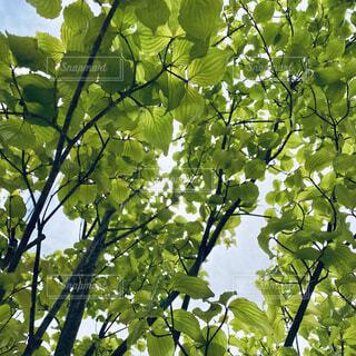 木のクローズアップの写真・画像素材[4365538]