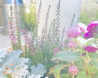 テーブルの上に花の花瓶の写真・画像素材[4931247]
