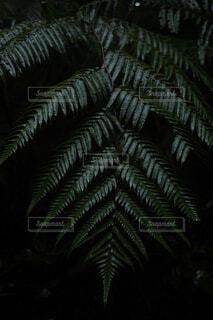 自然,屋内,樹木,ヤシの木,草木,日中,陸生植物