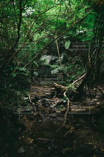自然,森林,屋外,太陽,樹木,ジャングル,草木,日中