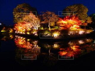 京都の秋紅葉の写真・画像素材[4395500]
