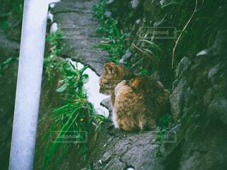 猫,動物,屋外,緑,フィルム,草木,フィルム風