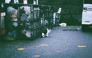猫,動物,屋外,フィルム,ゴミ,ゴミ捨て場,フィルム風