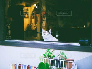 猫,動物,フィルム,フィルム風