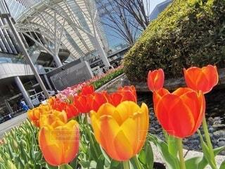 花,赤,駅,黄色,チューリップ,博多,草木