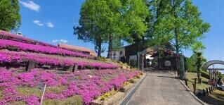 空,花,屋外,ピンク,緑,青,景色,樹木