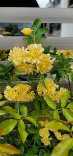 花,緑,花束,黄色,バラ,ガーデニング,薔薇,イエロー,グリーン,モッコウバラ,草木,フローラ