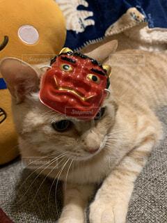 猫,動物,お部屋,鬼,茶トラ,お面,節分,鬼のお面