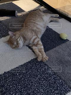 猫,動物,リビング,屋内,床,子猫,おもちゃ,寝てる,茶トラ,爆睡
