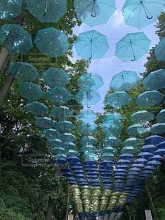 傘,屋外,青,水色,樹木,アンブレラカーテン