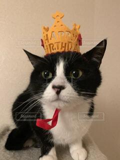 猫,動物,屋内,白,黒,子猫,座る,誕生日,ハチワレ