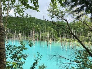 自然,屋外,湖,水面,水色,樹木,パワースポット,空気,澄み切っている