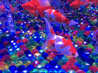 魚,カラフル,水族館,葉,水中,キラキラ,容器,金魚,カラー,ビー玉