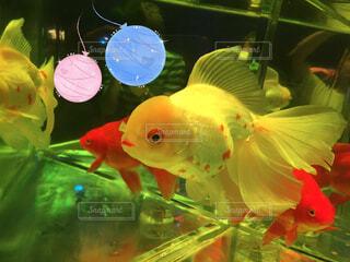 動物,魚,綺麗,葉,容器,金魚,金魚鉢