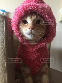 動物,屋内,ピンク,かわいい,子猫,茶トラ,パジャマ