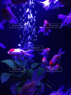 風景,魚,屋内,紫,幻想的,水族館,葉,明るい,金魚