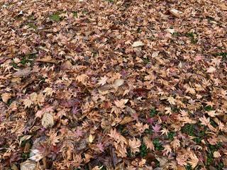 秋,屋外,茶色,葉,草,落ち葉,一面