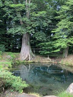 森林,屋外,湖,水面,樹木,神秘的,ひっそり