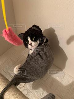 猫,動物,屋内,白黒,猫じゃらし,子猫,壁,かぶりもの,ハチワレ