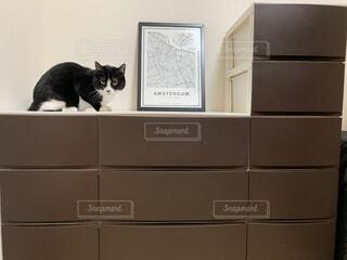 猫,動物,屋内,白,黒,座る,カメラ目線,ハチワレ,シンク,たんす,収納ボックス